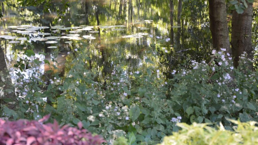 lac reflections plantes aquatiques