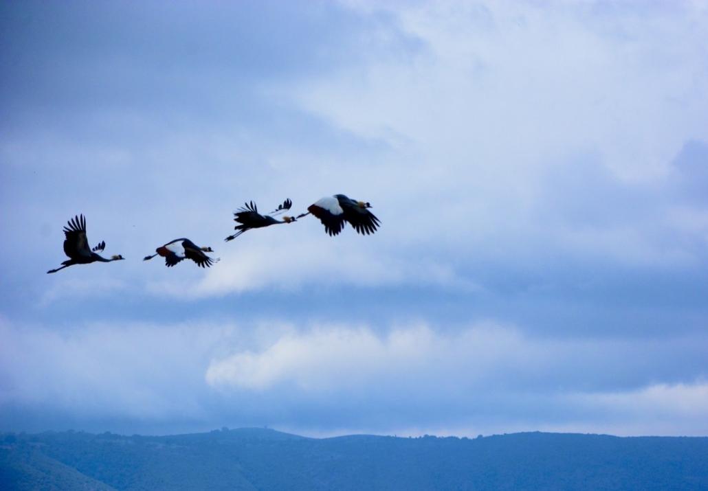 envol, oiseaux bird flight