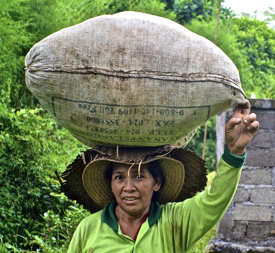 la récolte du riz, Bali Rice crop on her head
