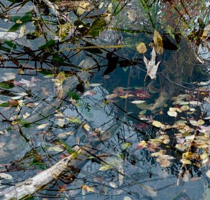 feuilles sur l'eau fin de saison Laurentides Québec
